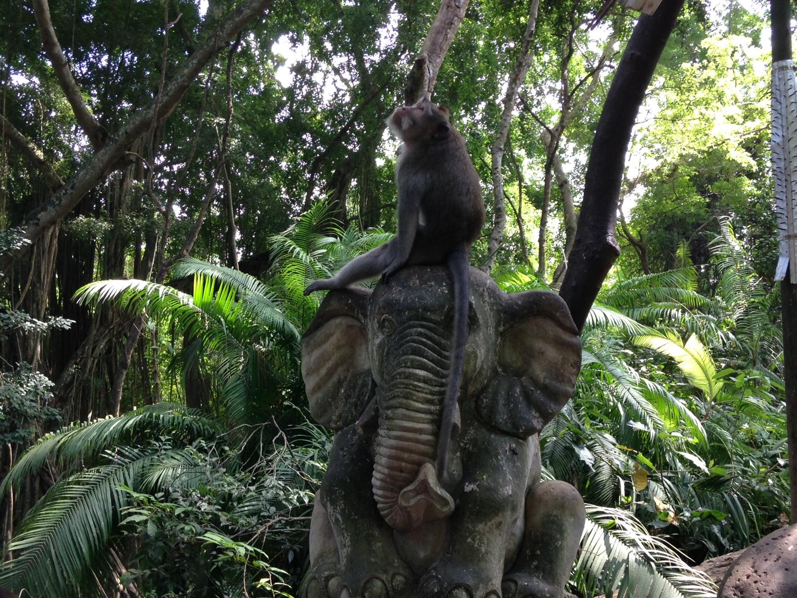maimuta elefant